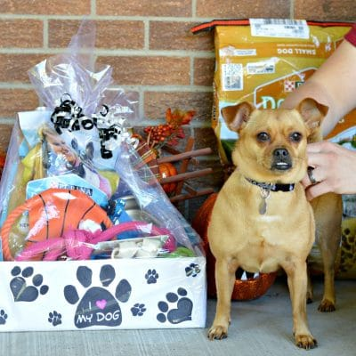 How To Make A Pamper Box For Your Dog